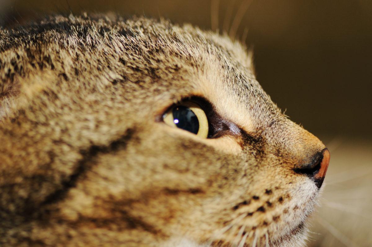 (リビンマッチ)猫のためにリフォーム